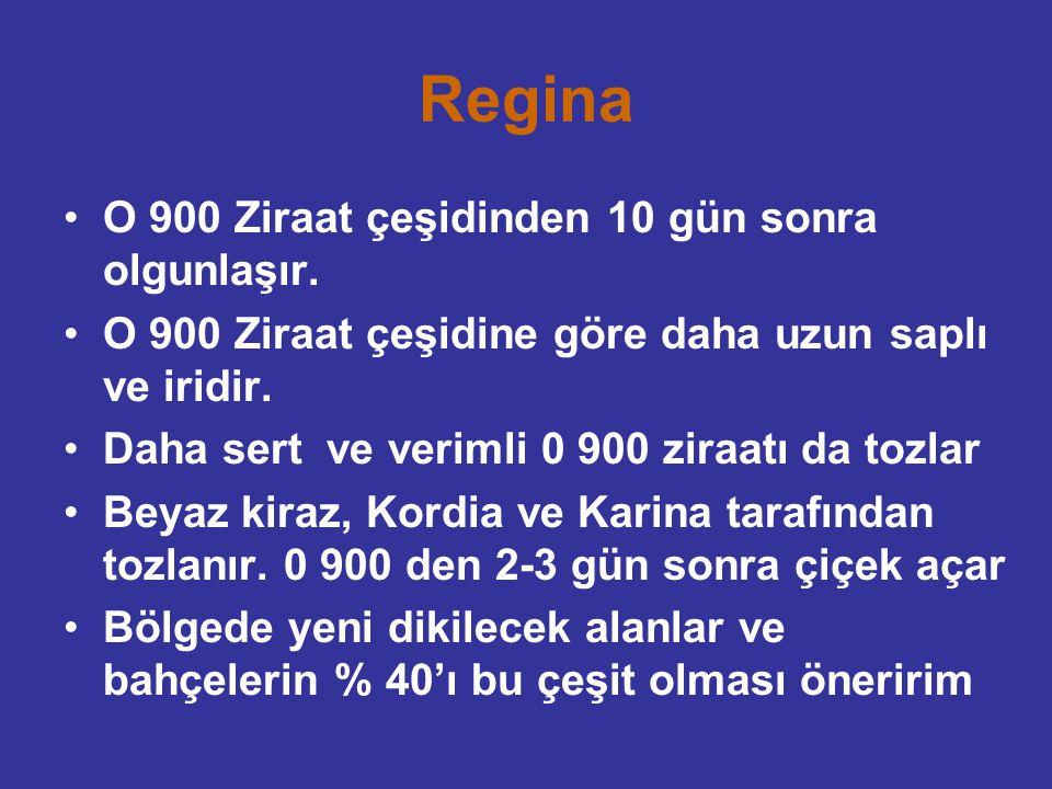 Regina O 900 Ziraat çeşidinden 10 gün sonra olgunlaşır. O 900 Ziraat çeşidine göre daha uzun saplı ve iridir. Daha sert ve verimli 0 900 ziraatı da to