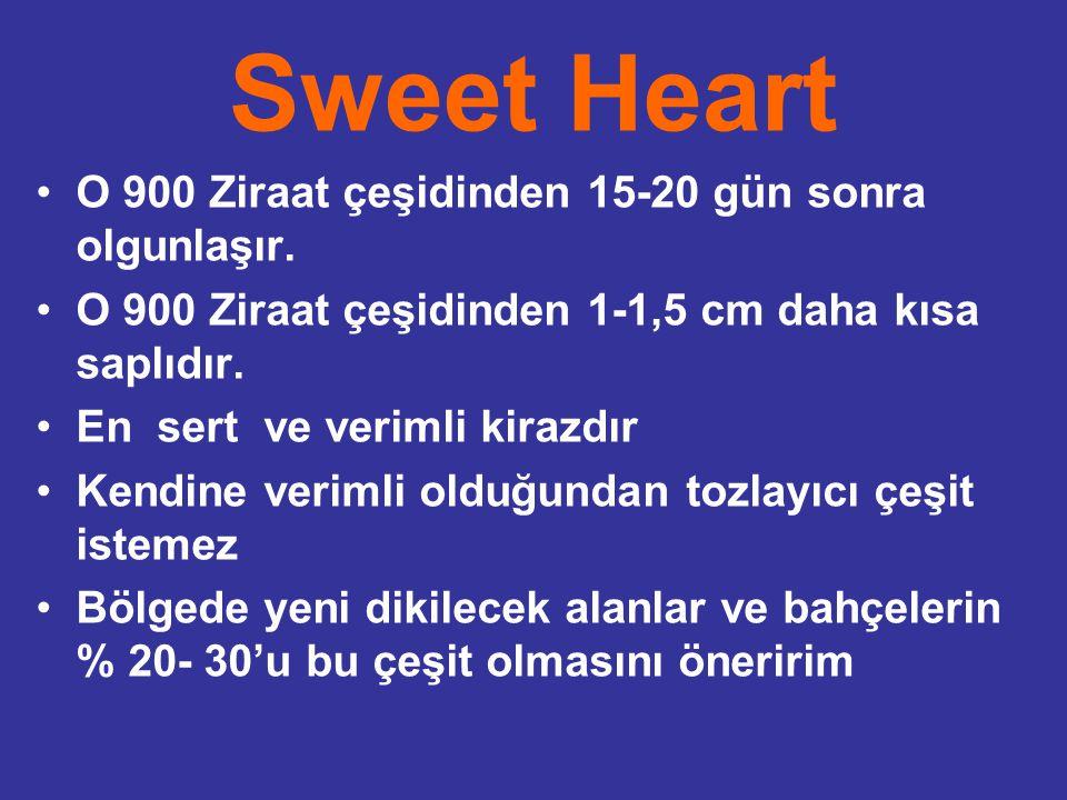 Sweet Heart O 900 Ziraat çeşidinden 15-20 gün sonra olgunlaşır. O 900 Ziraat çeşidinden 1-1,5 cm daha kısa saplıdır. En sert ve verimli kirazdır Kendi