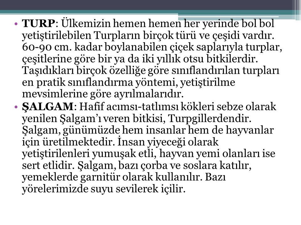 TURP: Ülkemizin hemen hemen her yerinde bol bol yetiştirilebilen Turpların birçok türü ve çeşidi vardır.