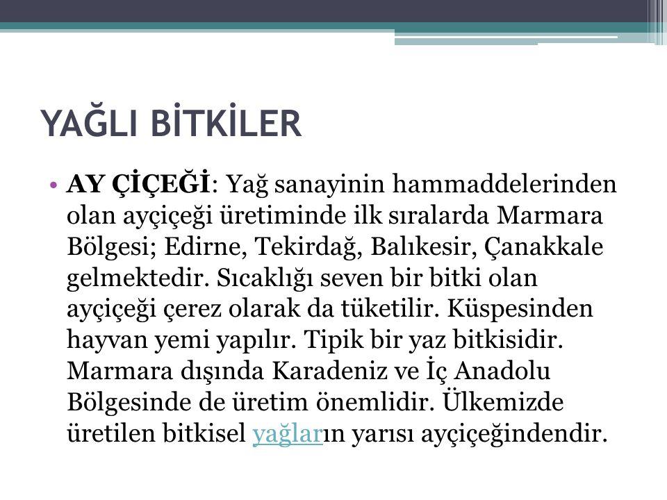 YAĞLI BİTKİLER AY ÇİÇEĞİ: Yağ sanayinin hammaddelerinden olan ayçiçeği üretiminde ilk sıralarda Marmara Bölgesi; Edirne, Tekirdağ, Balıkesir, Çanakkale gelmektedir.