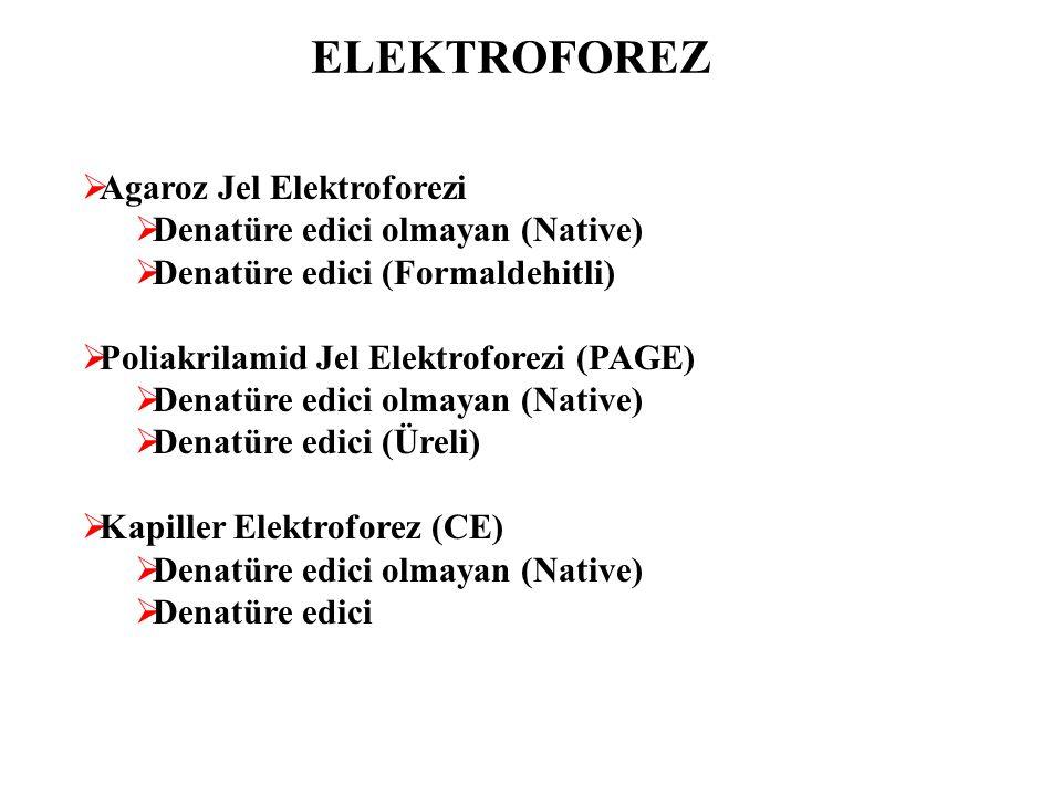 ELEKTROFOREZ  Agaroz Jel Elektroforezi  Denatüre edici olmayan (Native)  Denatüre edici (Formaldehitli)  Poliakrilamid Jel Elektroforezi (PAGE) 
