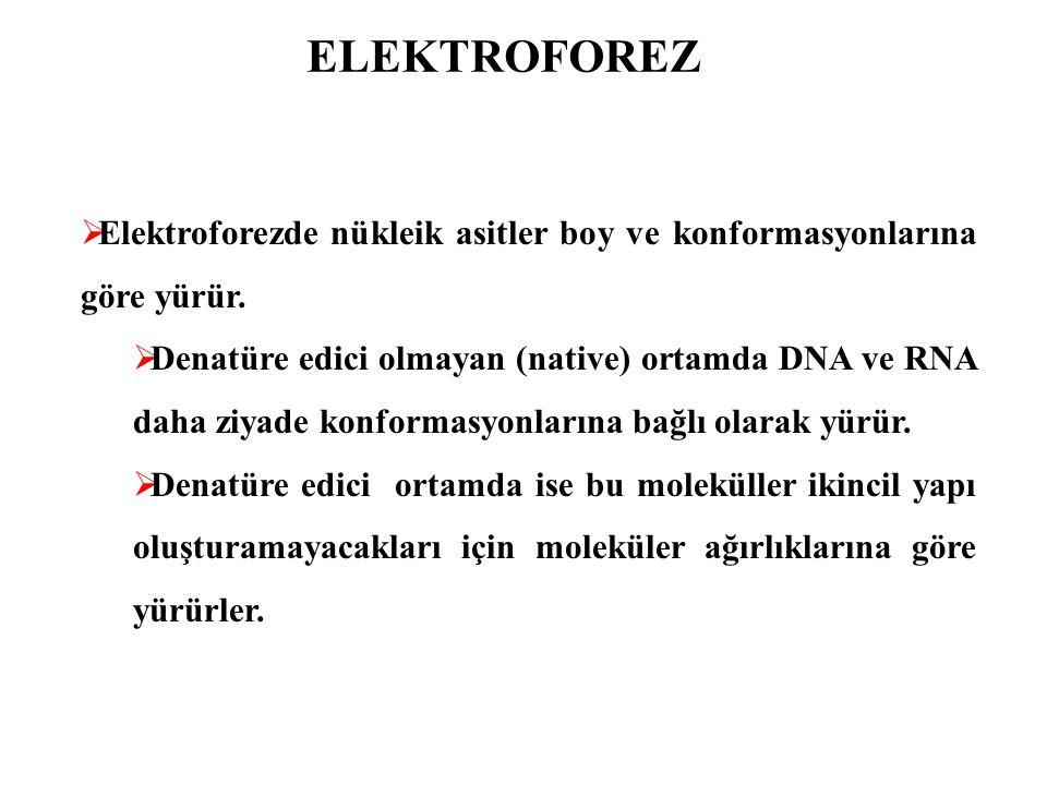ELEKTROFOREZ  Agaroz Jel Elektroforezi  Denatüre edici olmayan (Native)  Büyük moleküler ağırlıklı DNA yürütülecekse (genomik DNA gibi) %0.8-1 arası jel hazırlanmalıdır.