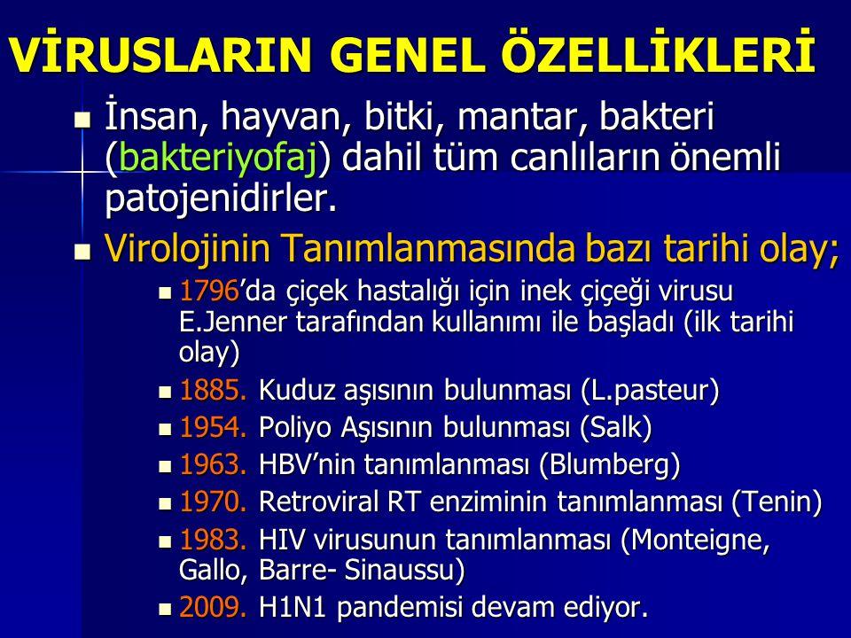 1)HÜCREYE GİRİŞ: A)TUTUNMA A)TUTUNMA ● Virus hücresel reseptörlere tutunma Viryon ligandları (tutunma molekülleri) Viryon ligandları (tutunma molekülleri)  Çıplak viruslarda;  Kapsid proteinleri ♣ Fiber antijeni (Adenovirus) ♣ Fiber antijeni (Adenovirus) ♣ Major kapsid antijeni (HAV) ♣ Major kapsid antijeni (HAV) ♣ VP1, VP2 (Parvovirus B19) ♣ VP1, VP2 (Parvovirus B19)  Zarflı viruslarda;  Zarf glikoproteinler ♣ GP 120 (HIV) ♣ GP E (I) (VZV) ♣ Hemaglutinin ve Nöramidaz (INF)