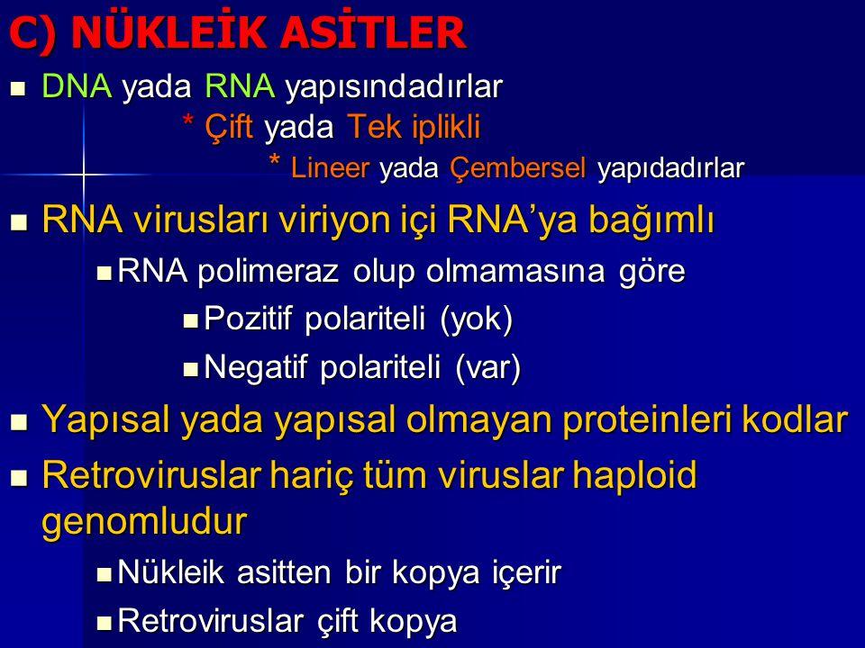 C) NÜKLEİK ASİTLER DNA yada RNA yapısındadırlar * Çift yada Tek iplikli * Lineer yada Çembersel yapıdadırlar DNA yada RNA yapısındadırlar * Çift yada