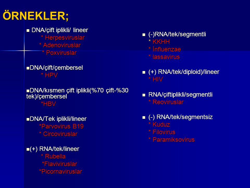 ÖRNEKLER; DNA/çift iplikli/ lineer DNA/çift iplikli/ lineer * Herpesviruslar * Herpesviruslar * Adenoviruslar * Adenoviruslar * Poxviruslar * Poxvirus