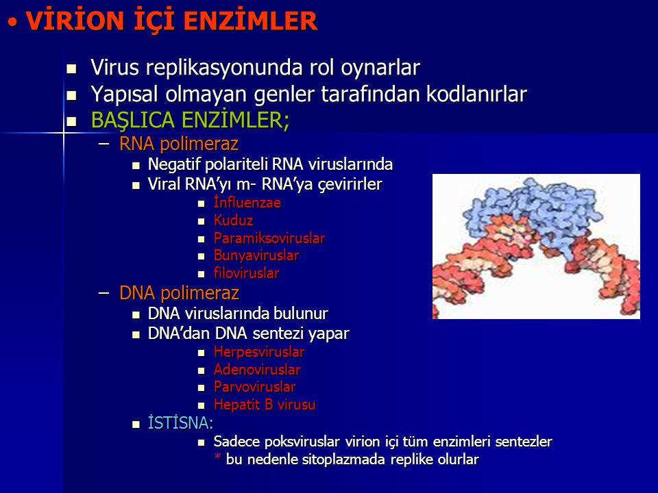 VİRİON İÇİ ENZİMLER VİRİON İÇİ ENZİMLER Virus replikasyonunda rol oynarlar Virus replikasyonunda rol oynarlar Yapısal olmayan genler tarafından kodlan