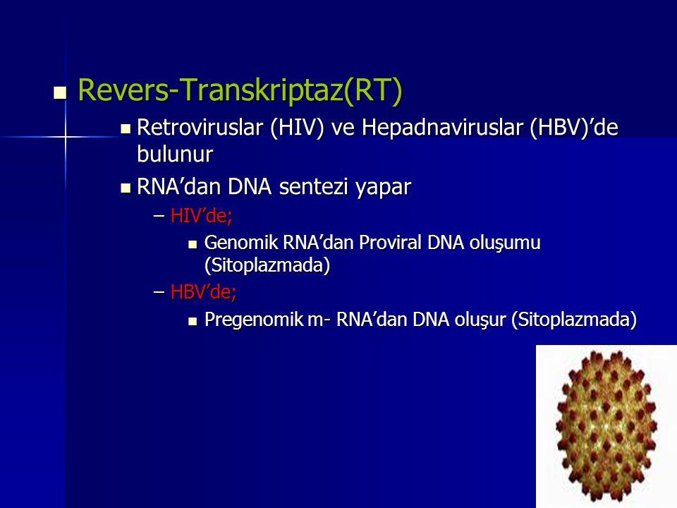 Revers-Transkriptaz(RT) Revers-Transkriptaz(RT) Retroviruslar (HIV) ve Hepadnaviruslar (HBV)'de bulunur Retroviruslar (HIV) ve Hepadnaviruslar (HBV)'d
