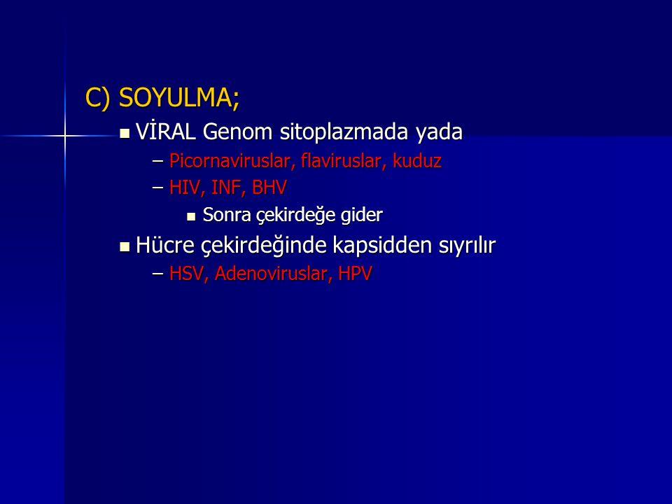 C) SOYULMA; VİRAL Genom sitoplazmada yada VİRAL Genom sitoplazmada yada –Picornaviruslar, flaviruslar, kuduz –HIV, INF, BHV Sonra çekirdeğe gider Sonr