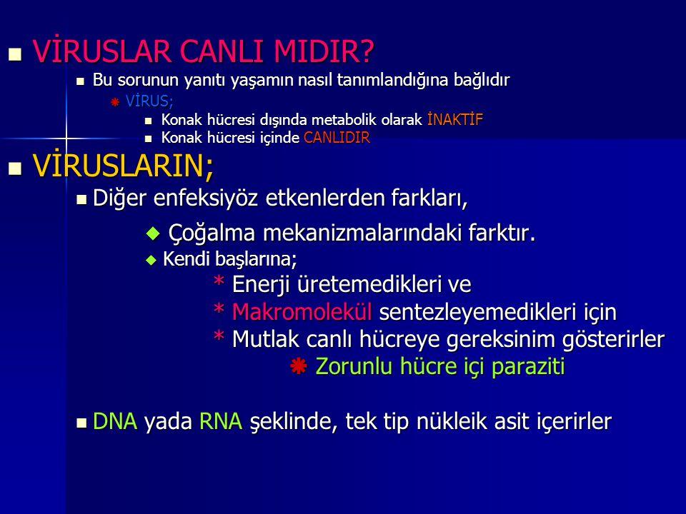 C) NÜKLEİK ASİTLER DNA yada RNA yapısındadırlar * Çift yada Tek iplikli * Lineer yada Çembersel yapıdadırlar DNA yada RNA yapısındadırlar * Çift yada Tek iplikli * Lineer yada Çembersel yapıdadırlar RNA virusları viriyon içi RNA'ya bağımlı RNA virusları viriyon içi RNA'ya bağımlı RNA polimeraz olup olmamasına göre RNA polimeraz olup olmamasına göre Pozitif polariteli (yok) Pozitif polariteli (yok) Negatif polariteli (var) Negatif polariteli (var) Yapısal yada yapısal olmayan proteinleri kodlar Yapısal yada yapısal olmayan proteinleri kodlar Retroviruslar hariç tüm viruslar haploid genomludur Retroviruslar hariç tüm viruslar haploid genomludur Nükleik asitten bir kopya içerir Nükleik asitten bir kopya içerir Retroviruslar çift kopya Retroviruslar çift kopya