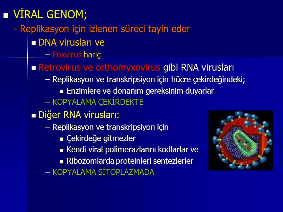 VİRAL GENOM; VİRAL GENOM; - Replikasyon için izlenen süreci tayin eder DNA virusları ve DNA virusları ve –Poxvirus hariç Retrovirus ve orthomyxovirus