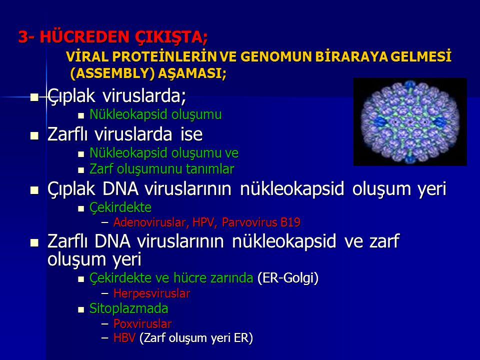 3- HÜCREDEN ÇIKIŞTA; VİRAL PROTEİNLERİN VE GENOMUN BİRARAYA GELMESİ (ASSEMBLY) AŞAMASI; Çıplak viruslarda; Çıplak viruslarda; Nükleokapsid oluşumu Nük