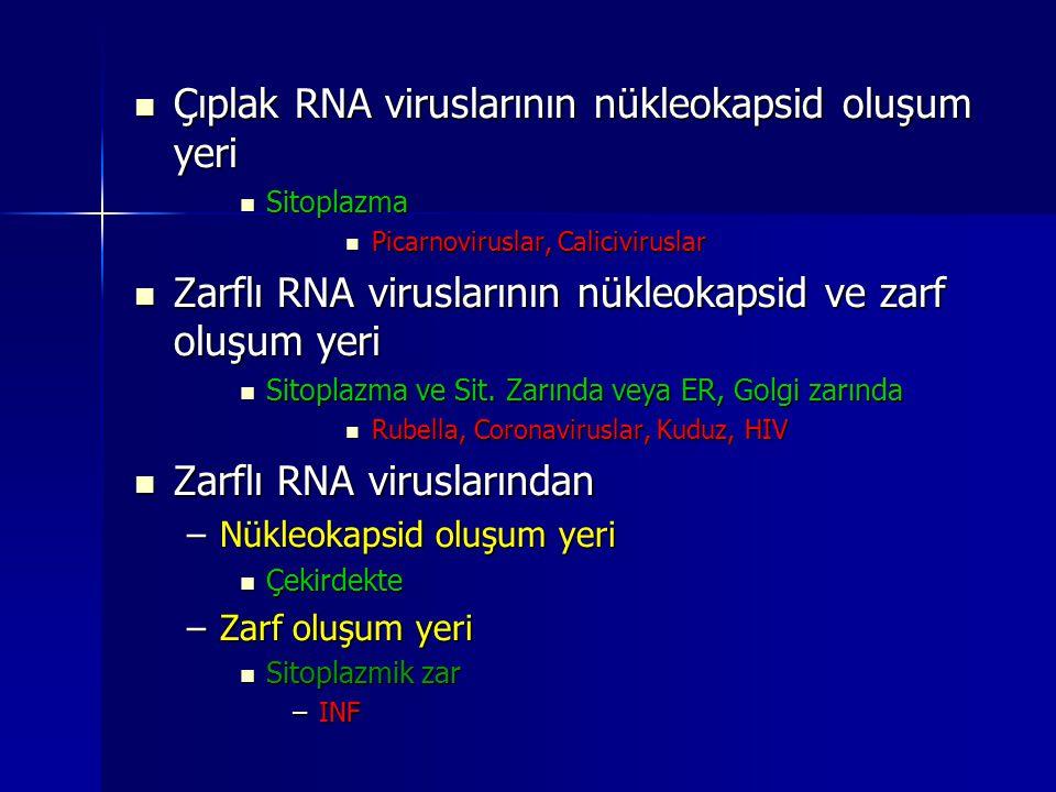 Çıplak RNA viruslarının nükleokapsid oluşum yeri Çıplak RNA viruslarının nükleokapsid oluşum yeri Sitoplazma Sitoplazma Picarnoviruslar, Calicivirusla
