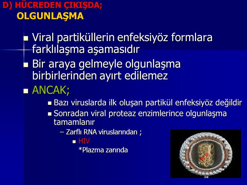 D) HÜCREDEN ÇIKIŞDA; OLGUNLAŞMA Viral partiküllerin enfeksiyöz formlara farklılaşma aşamasıdır Viral partiküllerin enfeksiyöz formlara farklılaşma aşa