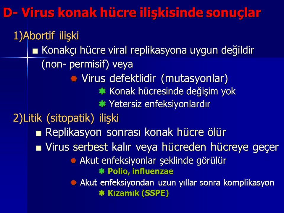D- Virus konak hücre ilişkisinde sonuçlar 1)Abortif ilişki ■ Konakçı hücre viral replikasyona uygun değildir (non- permisif) veya  Virus defektlidir
