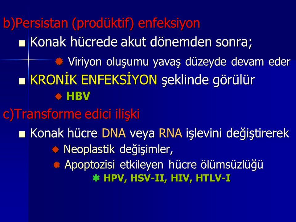 b)Persistan (prodüktif) enfeksiyon ■ Konak hücrede akut dönemden sonra; ■ Konak hücrede akut dönemden sonra;  Viriyon oluşumu yavaş düzeyde devam ede