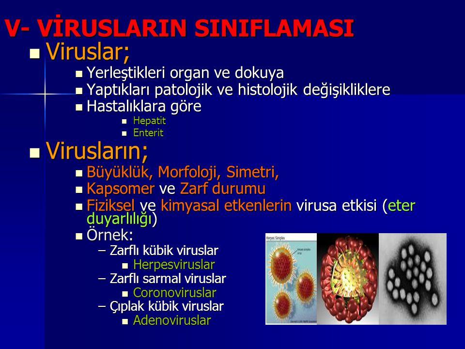 V- VİRUSLARIN SINIFLAMASI Viruslar; Viruslar; Yerleştikleri organ ve dokuya Yerleştikleri organ ve dokuya Yaptıkları patolojik ve histolojik değişikli