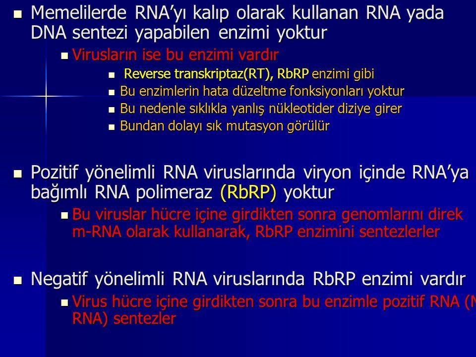 Memelilerde RNA'yı kalıp olarak kullanan RNA yada DNA sentezi yapabilen enzimi yoktur Memelilerde RNA'yı kalıp olarak kullanan RNA yada DNA sentezi ya