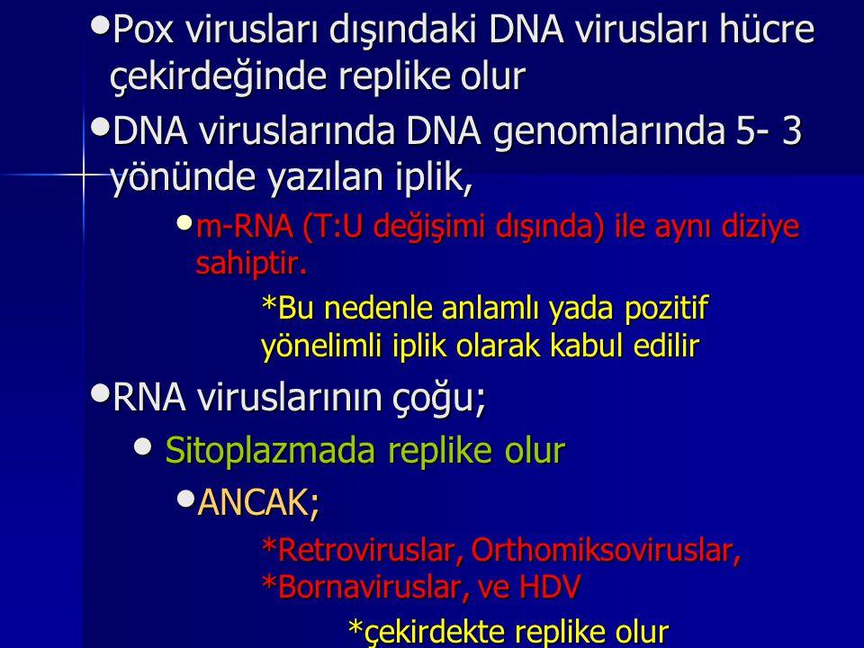 Pox virusları dışındaki DNA virusları hücre çekirdeğinde replike olur Pox virusları dışındaki DNA virusları hücre çekirdeğinde replike olur DNA virusl
