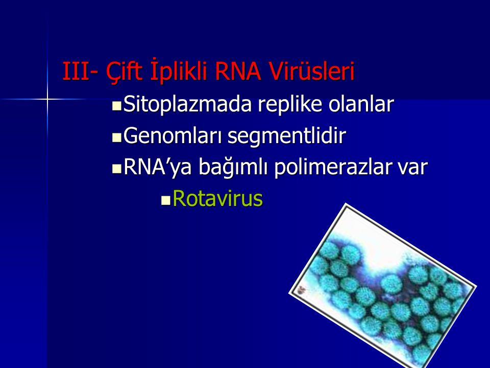III- Çift İplikli RNA Virüsleri Sitoplazmada replike olanlar Sitoplazmada replike olanlar Genomları segmentlidir Genomları segmentlidir RNA'ya bağımlı