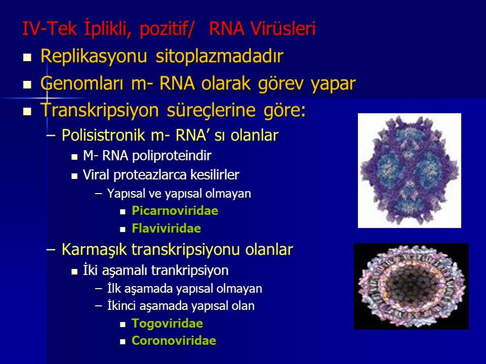 IV-Tek İplikli, pozitif/ RNA Virüsleri Replikasyonu sitoplazmadadır Replikasyonu sitoplazmadadır Genomları m- RNA olarak görev yapar Genomları m- RNA
