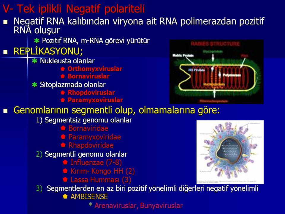 V- Tek iplikli Negatif polariteli Negatif RNA kalıbından viryona ait RNA polimerazdan pozitif RNA oluşur Negatif RNA kalıbından viryona ait RNA polime