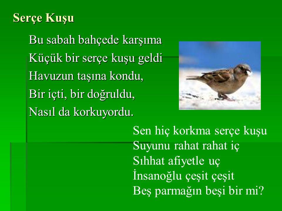 Serçe Kuşu Bu sabah bahçede karşıma Küçük bir serçe kuşu geldi Havuzun taşına kondu, Bir içti, bir doğruldu, Nasıl da korkuyordu.