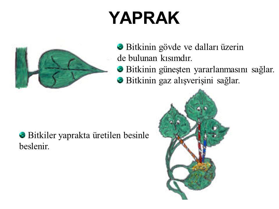 YAPRAK Bitkinin gövde ve dalları üzerin de bulunan kısımdır.
