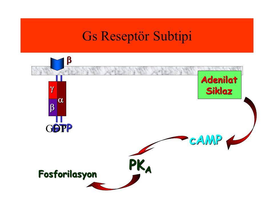 GTP  Gs Reseptör Subtipi GDP Adenilat Siklaz    cAMP PK A Fosforilasyon 