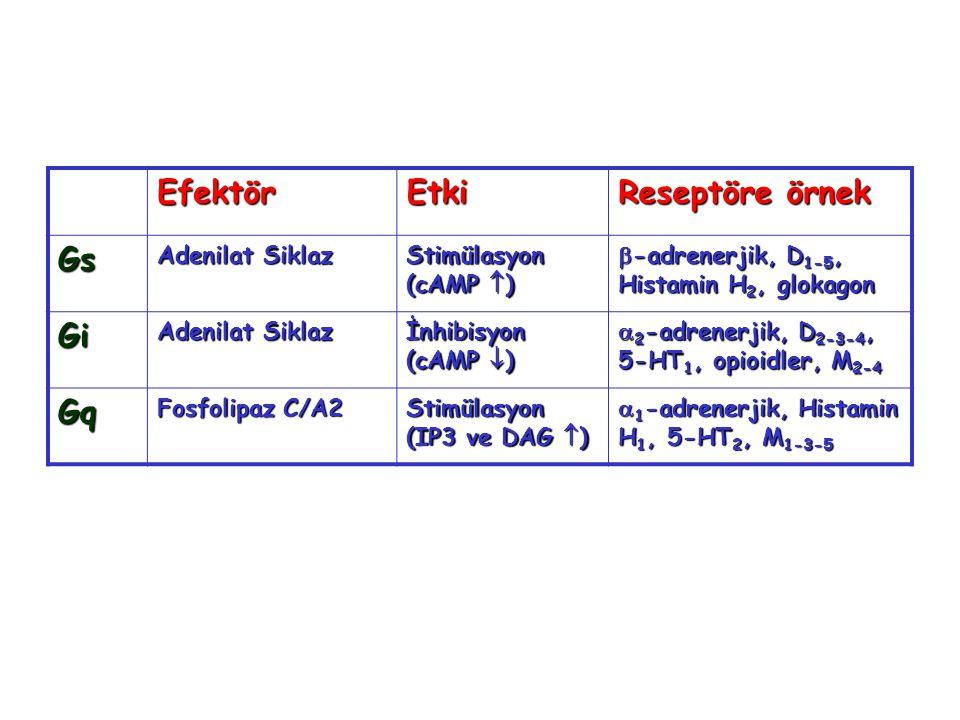 EfektörEtki Reseptöre örnek Gs Adenilat Siklaz Stimülasyon (cAMP  )  -adrenerjik, D 1-5, Histamin H 2, glokagon Gi Adenilat Siklaz İnhibisyon (cAMP