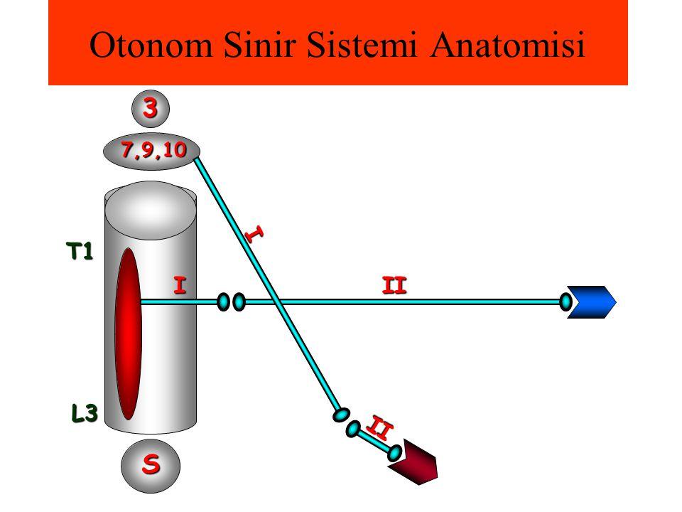 Otonom Sinir Sistemi AnatomisiT1L3 III 3 7,9,10 S I II