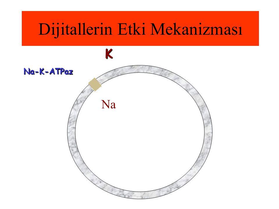 Dijitallerin Etki Mekanizması Na-K-ATPaz Na K
