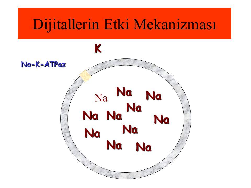 Dijitallerin Etki Mekanizması Na-K-ATPaz Na K Na Na Na Na Na Na Na NaNaNa