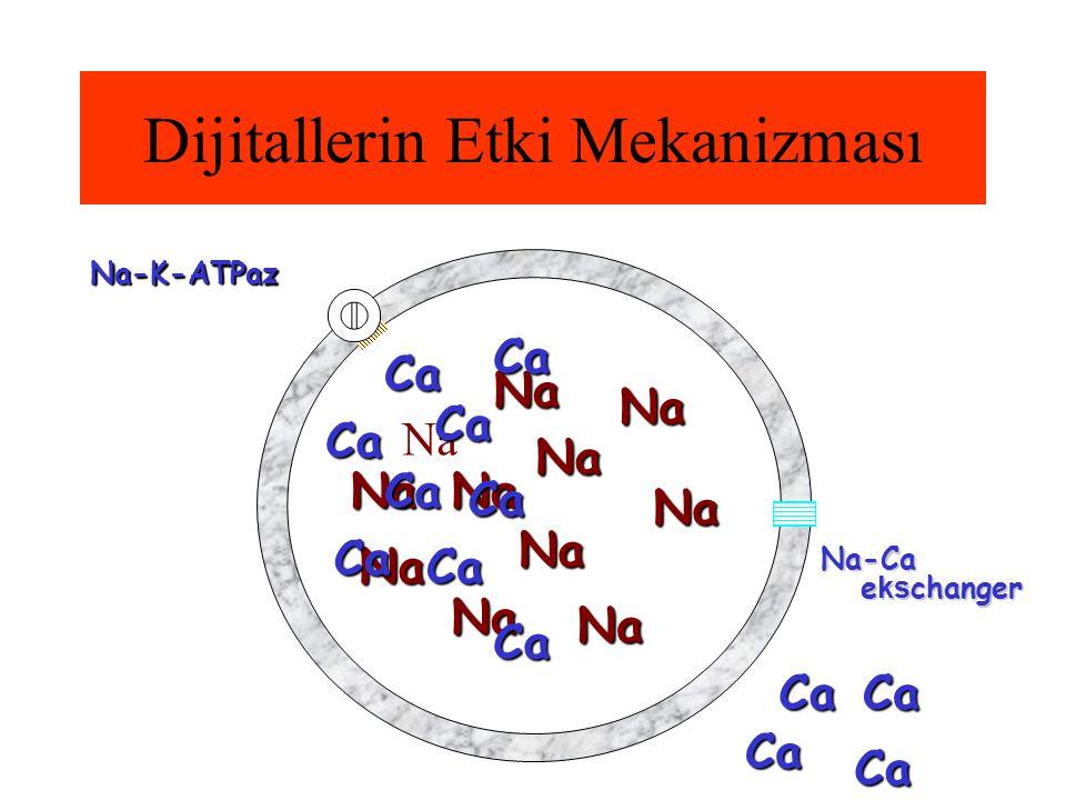 Dijitallerin Etki Mekanizması Na-K-ATPaz Na Na Na Na Na Na Na Na Na Na Na Na-Ca e ks changer CaCa Ca Ca Ca Ca Ca Ca Ca Ca Ca Ca Ca