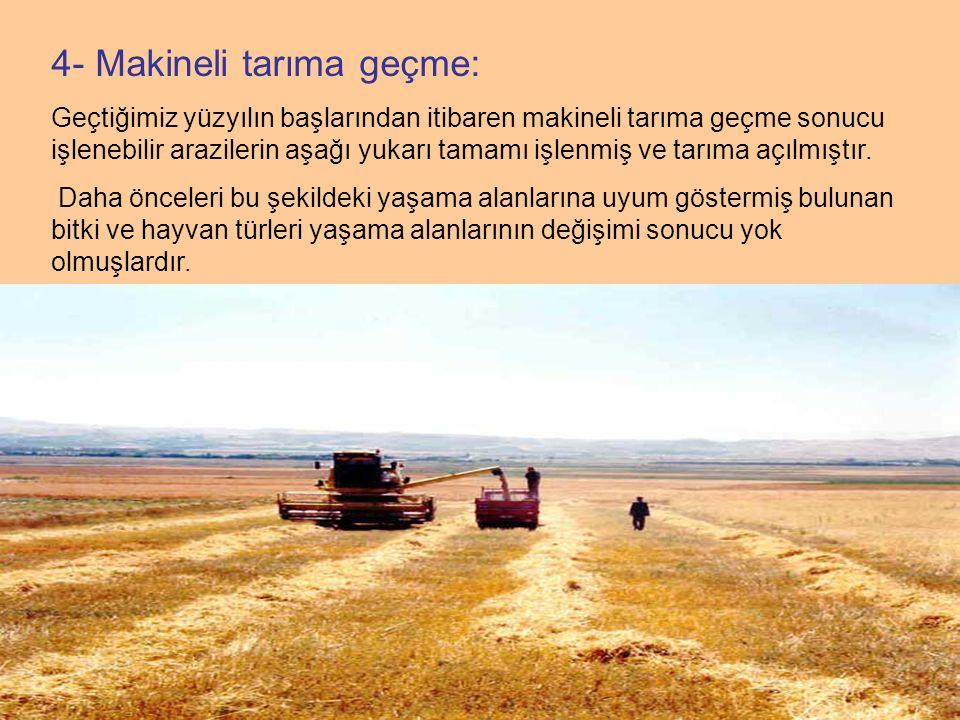 4- Makineli tarıma geçme: Geçtiğimiz yüzyılın başlarından itibaren makineli tarıma geçme sonucu işlenebilir arazilerin aşağı yukarı tamamı işlenmiş ve tarıma açılmıştır.