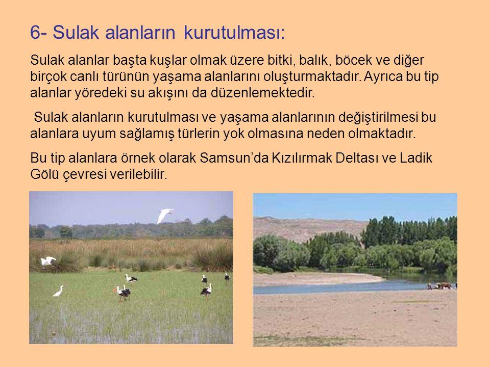 6- Sulak alanların kurutulması: Sulak alanlar başta kuşlar olmak üzere bitki, balık, böcek ve diğer birçok canlı türünün yaşama alanlarını oluşturmakt