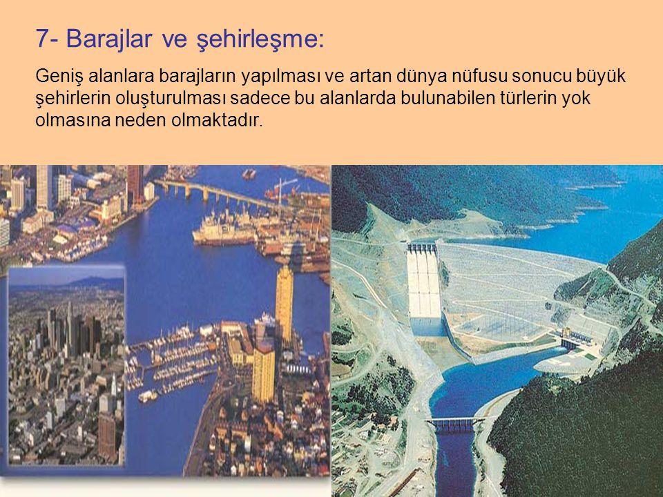 7- Barajlar ve şehirleşme: Geniş alanlara barajların yapılması ve artan dünya nüfusu sonucu büyük şehirlerin oluşturulması sadece bu alanlarda bulunabilen türlerin yok olmasına neden olmaktadır.