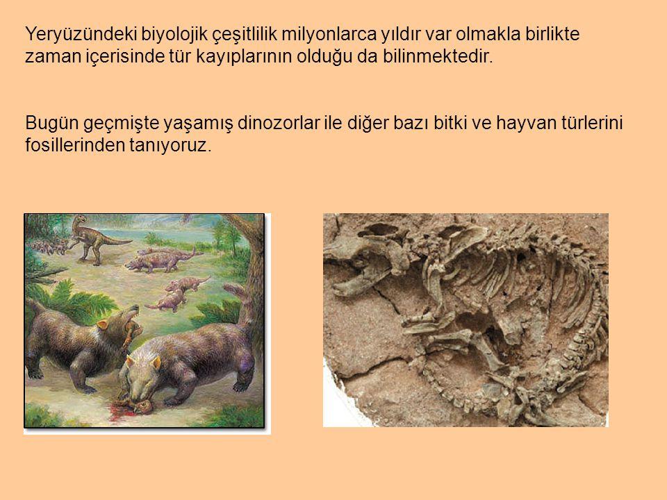 Yeryüzündeki biyolojik çeşitlilik milyonlarca yıldır var olmakla birlikte zaman içerisinde tür kayıplarının olduğu da bilinmektedir.