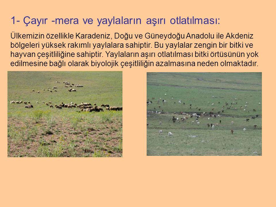 1- Çayır -mera ve yaylaların aşırı otlatılması: Ülkemizin özellikle Karadeniz, Doğu ve Güneydoğu Anadolu ile Akdeniz bölgeleri yüksek rakımlı yaylalar