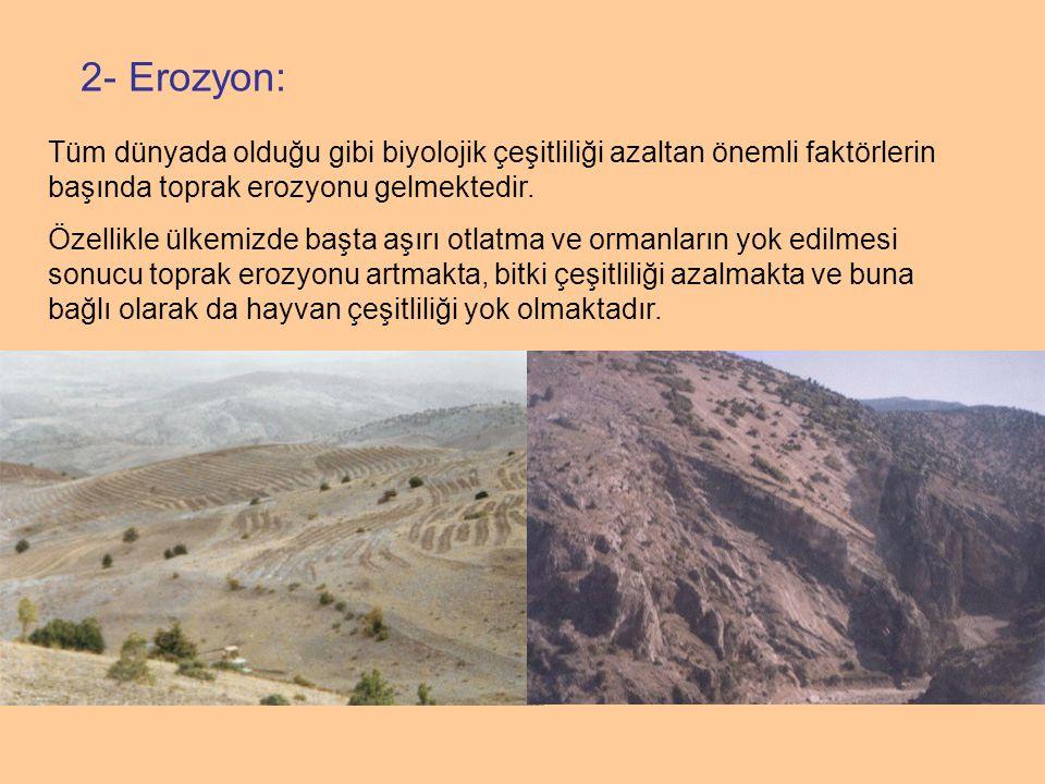 2- Erozyon: Tüm dünyada olduğu gibi biyolojik çeşitliliği azaltan önemli faktörlerin başında toprak erozyonu gelmektedir. Özellikle ülkemizde başta aş