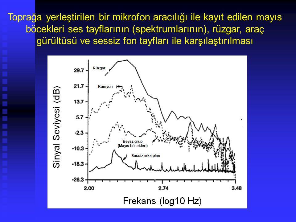 Toprak Canlıları Bakteriler Çok değişik metabolizmalara sahiptirler – Ototroflar ve heterotroflar – Havacıl (aerobik), havacıl olmayanlar (anaerobik), ve fakültativf (hem oksijenli hem de oksijensiz ortamda yaşayabilenler) Tek hücrelidirler ~1μm Toprakta en fazla olanlardır 10 8 - 10 9 /g toprak Çabuk gelişirler Rizobiyum (nodül) (Rhizobium)/baklagil ortak yaşamı Elektron mikrograf Escherichia coli bacili