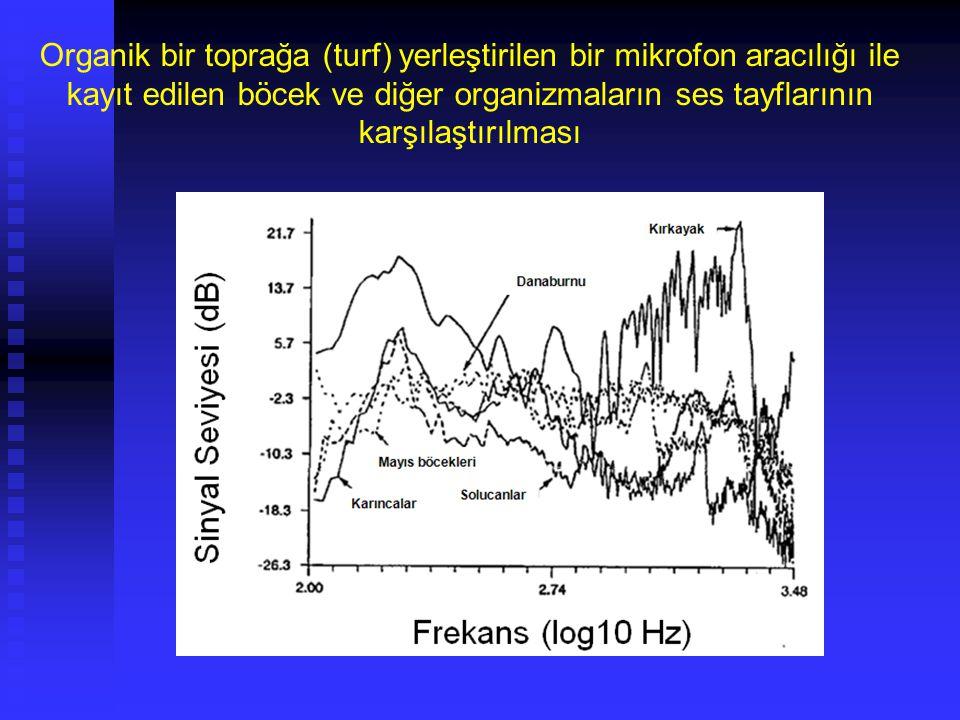 Toprak Biyolojisi Toprakta bulunan önemli organizmalar