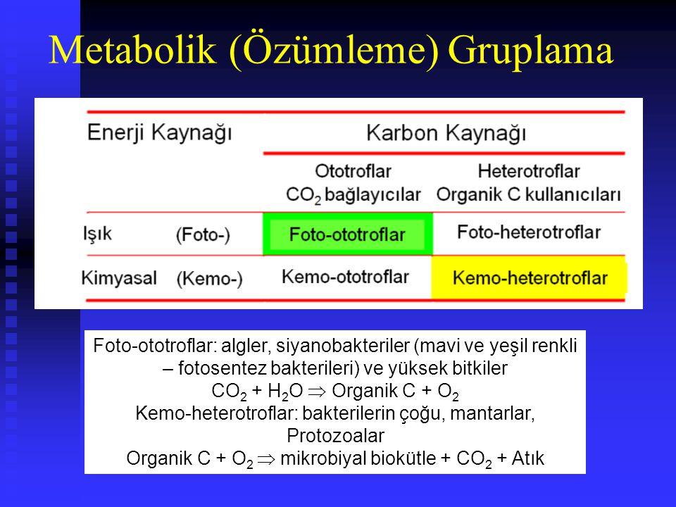 Ölçeklendirme Organizma boyutlarının temel toprak tanecikleri ile karşılaştırılması