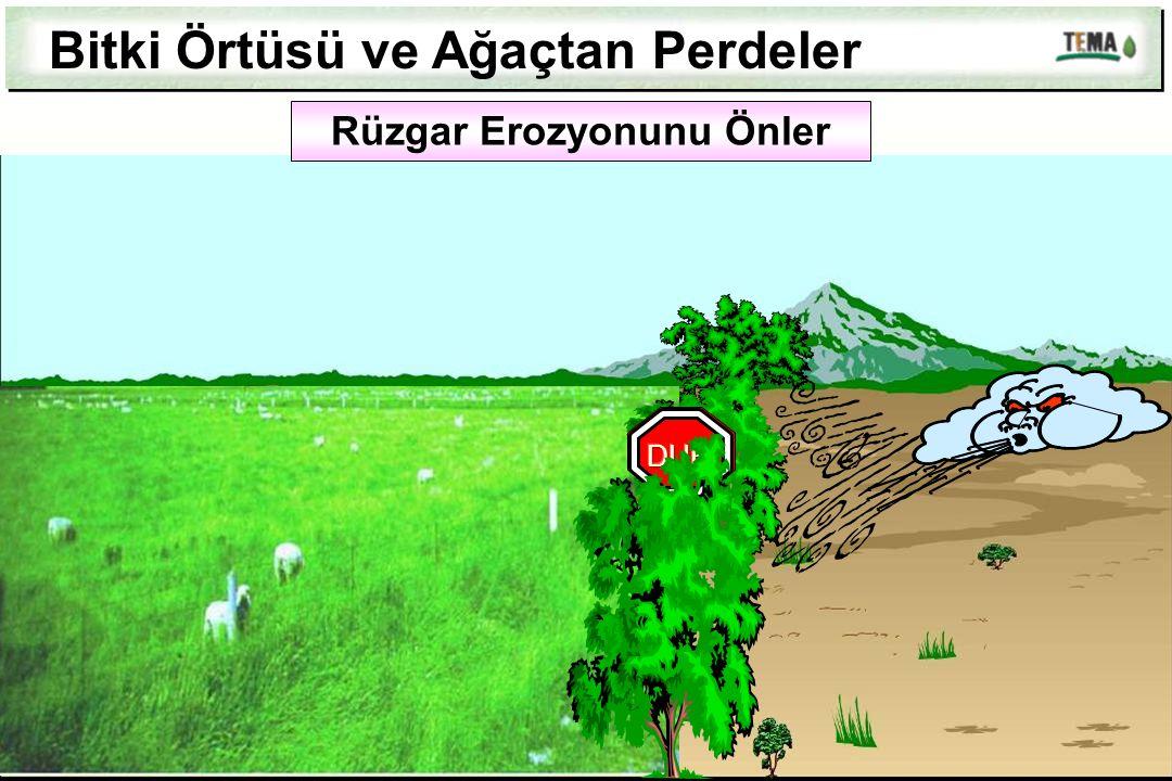 Rüzgar Erozyonunu Önler Bitki Örtüsü ve Ağaçtan Perdeler
