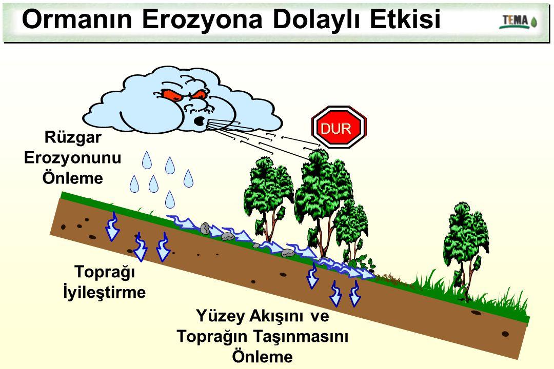Rüzgar Erozyonunu Önleme Yüzey Akışını ve Toprağın Taşınmasını Önleme Toprağı İyileştirme Ormanın Erozyona Dolaylı Etkisi