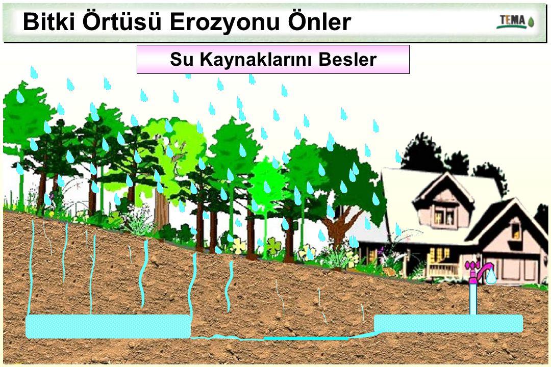 Bitki Örtüsü Erozyonu Önler Su Kaynaklarını Besler