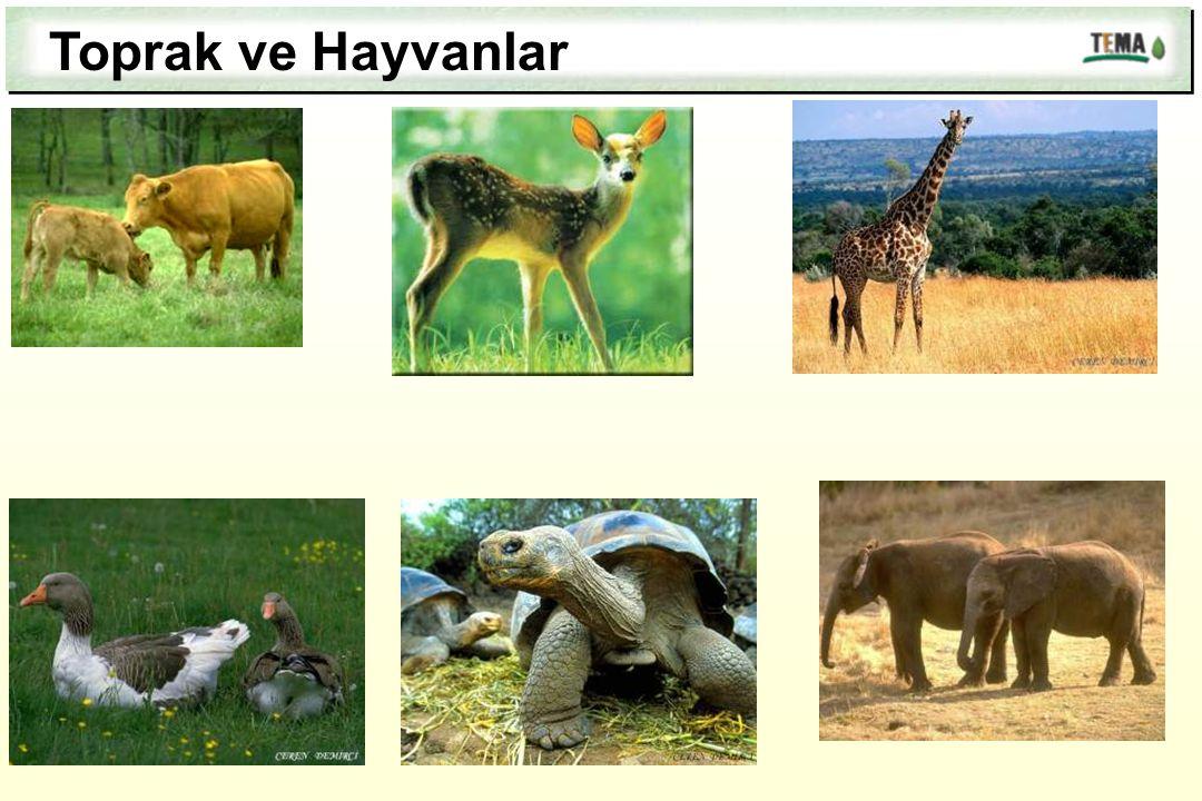 Toprak ve Hayvanlar