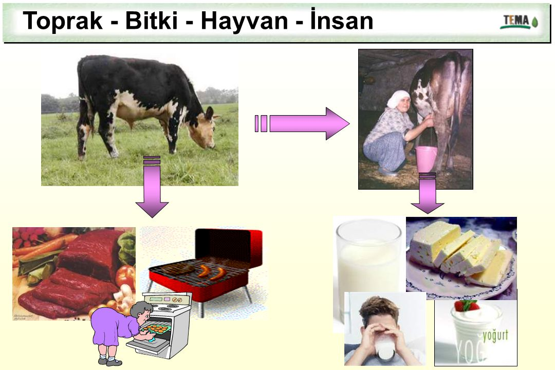 Toprak - Bitki - Hayvan - İnsan