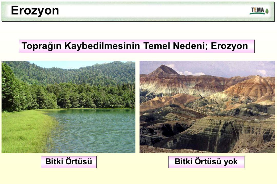Erozyon Toprağın Kaybedilmesinin Temel Nedeni; Erozyon Bitki ÖrtüsüBitki Örtüsü yok