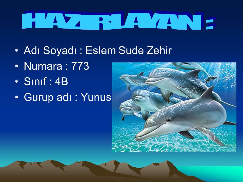 Adı Soyadı : Eslem Sude Zehir Numara : 773 Sınıf : 4B Gurup adı : Yunus