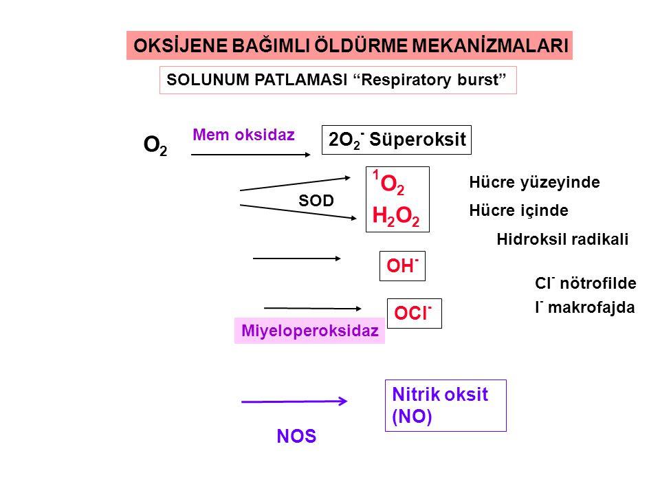 O2O2 2O 2 - Süperoksit 1O2H2O21O2H2O2 OH - OCl - Miyeloperoksidaz SOD Mem oksidaz Hücre yüzeyinde Hücre içinde OKSİJENE BAĞIMLI ÖLDÜRME MEKANİZMALARI